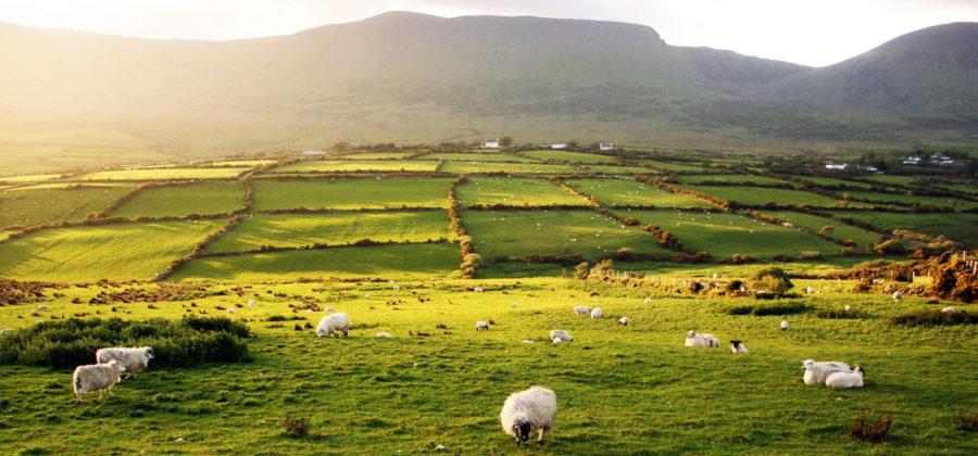 Положительные и отрицательные стороны иммиграции в Ирландию