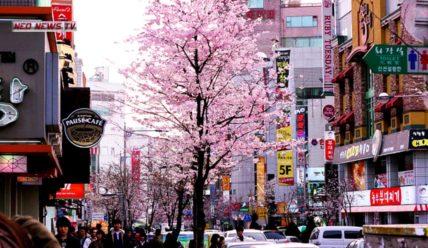 6 способов, как переехать в Южную Корею