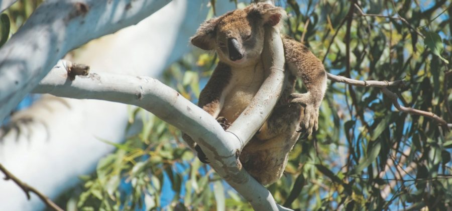 Вся красота первозданной природы в национальных парках Австралии