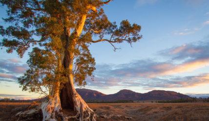 Инопланетные пейзажи на Земле – природные особенности Австралии