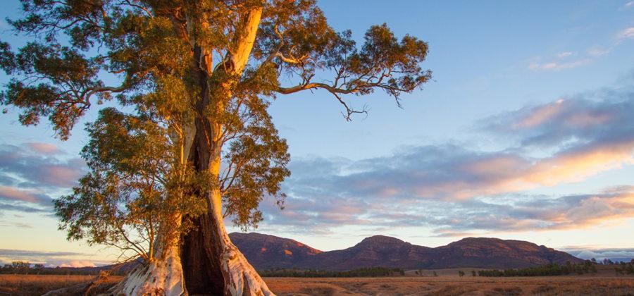 Инопланетные пейзажи на Земле — природные особенности Австралии